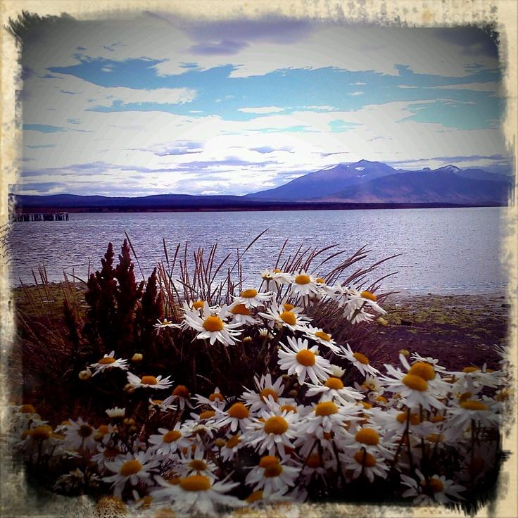 flores de puerto natales, chile - ene'12