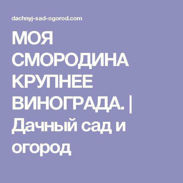 МОЯ СМОРОДИНА КРУПНЕЕ ВИНОГРАДА. | Дачный сад и огород