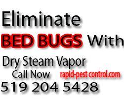 eliminate_bedbugs_london ontario
