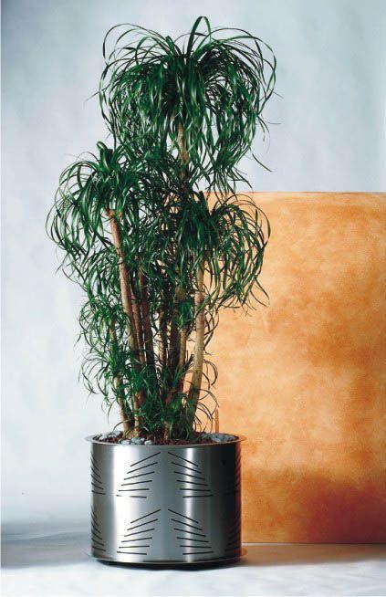 Edelstahlgefässe - Edelstahlgefäß Pflanzengefäß mit Längsschnitt