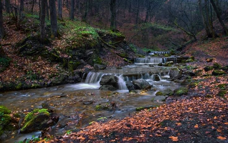 Stock image of 'Mountain stream with cascades in the spring forest after a rain'