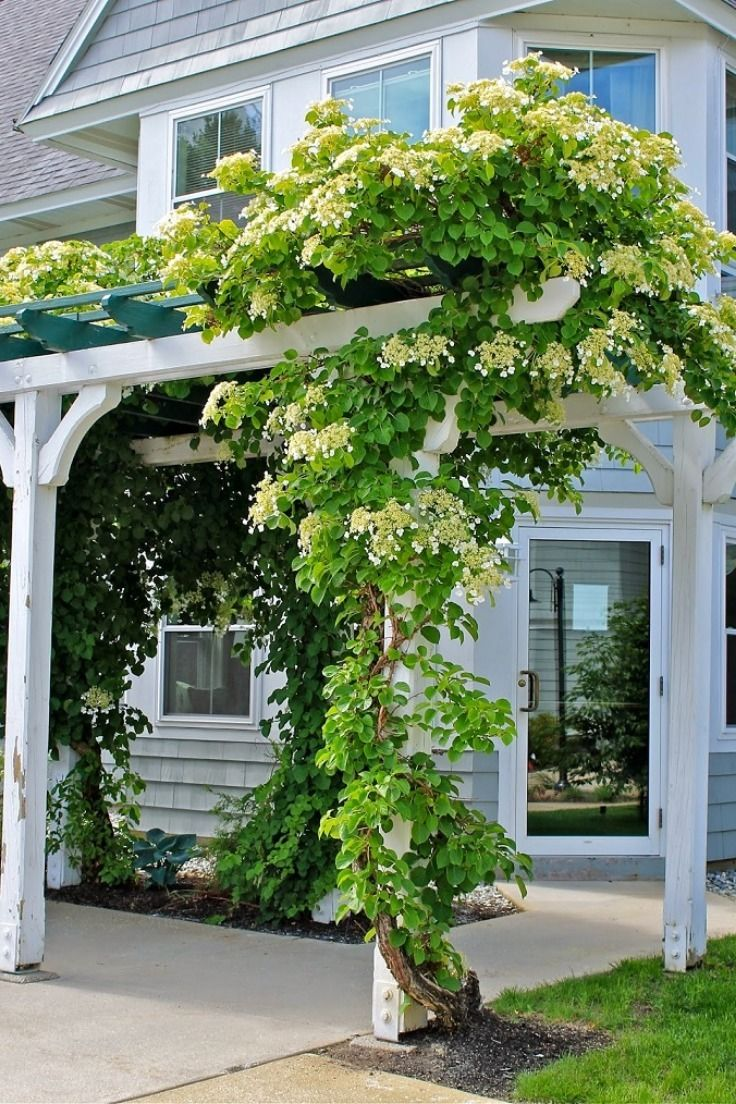 Top 10 Beautiful Climbing Plants For Fences And Walls Top Inspired Climbing Plants Fence Climbing Flowers Climbing Plants
