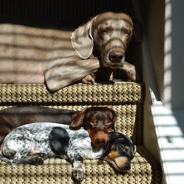 Sunbathers on the steps ... Harlow, Indiana, and Reese ... zzzzzzzz