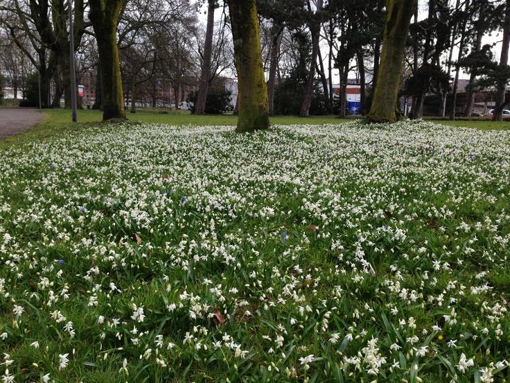 Zen-moment voor het werk, stadspark Maastricht