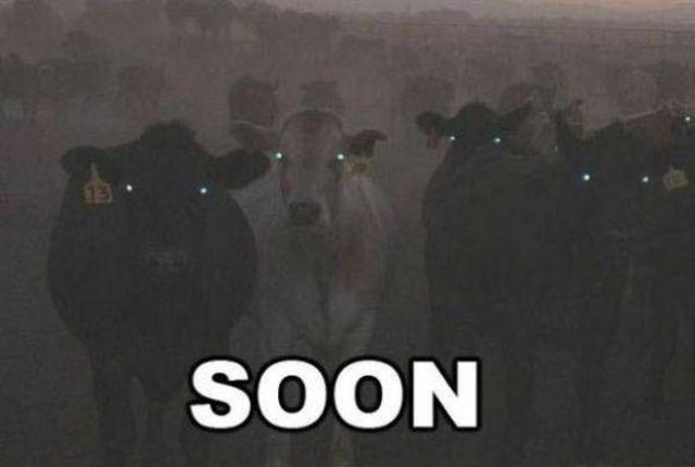 """Soon"" Meme"
