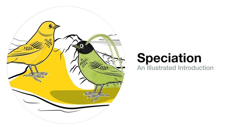 Ap Environmental Science Directional Natural Selection