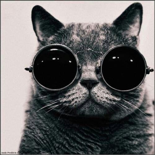 3012753505714 68 melhores imagens de més que ulleres no Pinterest   Óculos, Cartaz ...