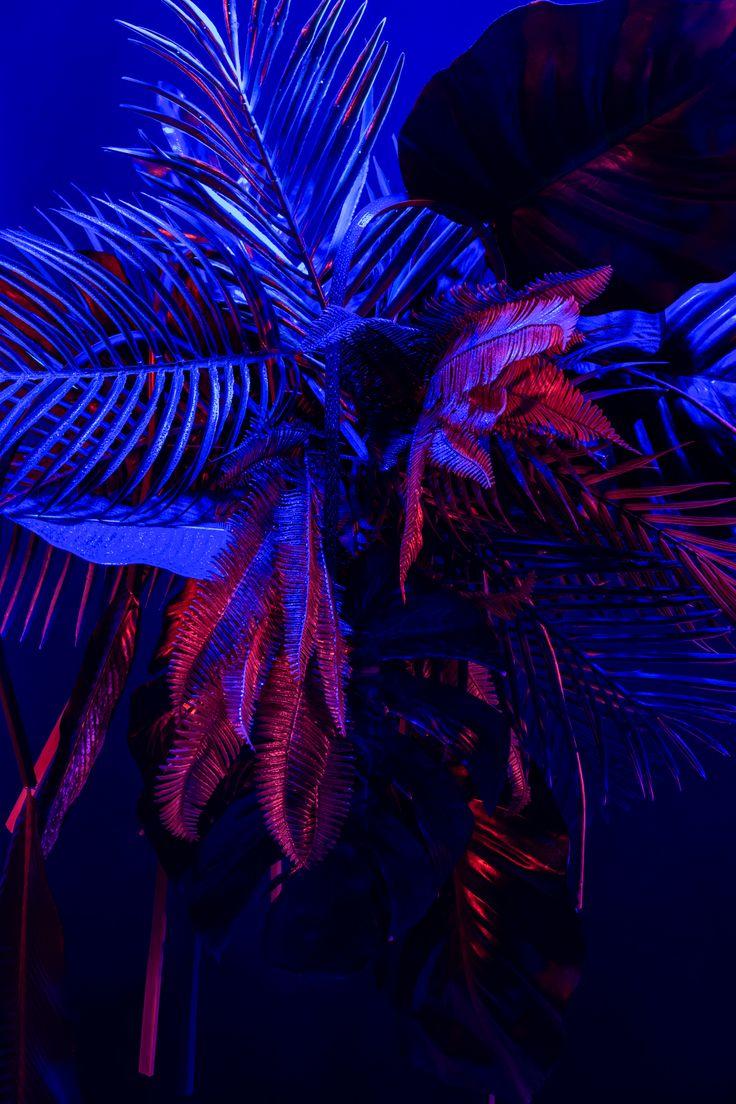 Jungle – Silodka