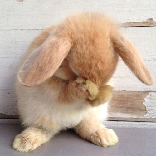 Coniglietto timido