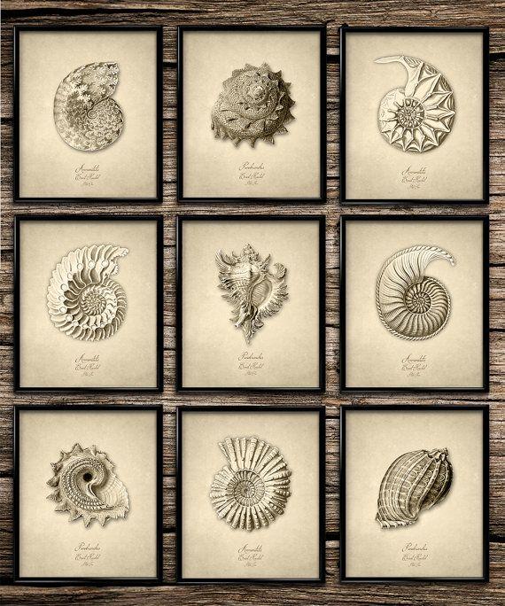 Ernst Haeckel Seashell Set | Vintage Print | Nautical Print | Home Decor | Nursery Decor | Printable Wall Art | Vintage Wall Art | Download