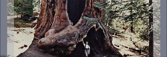 キングスキャニオン国立公園とセコイア国立公園