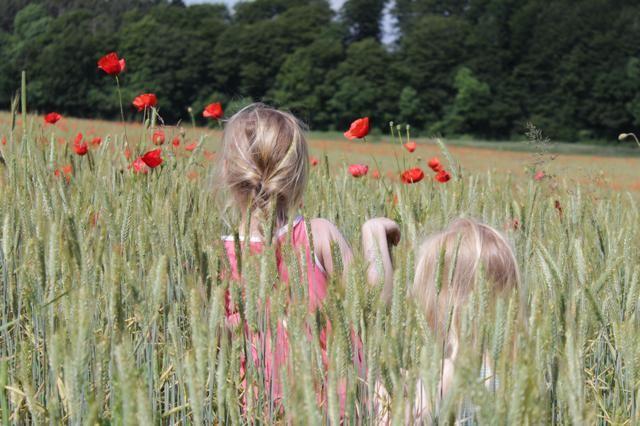 Dansk sommer #mark #blomster #family