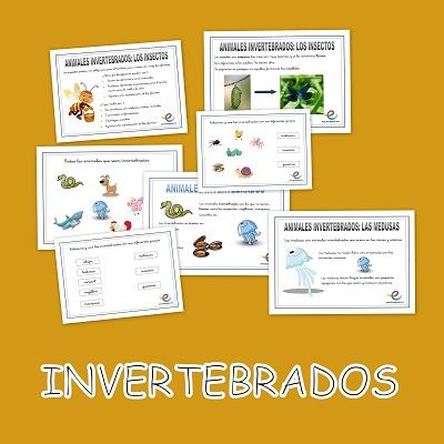 Características y clasificación de los animales invertebrados.  Presentados los animales vertebrados, nos centramos en el otro grupo de animales, los invertebrados: insectos, medusas, gusanos y moluscos.