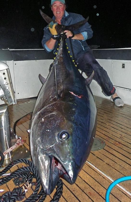 Sydney Angler Lands Monster Southern Bluefin Tuna
