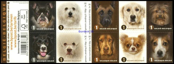 Dogs - Popular dog breeds - booklet