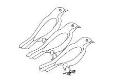 drei vögel sitzen auf einem ast | malvorlagen, raubvögel