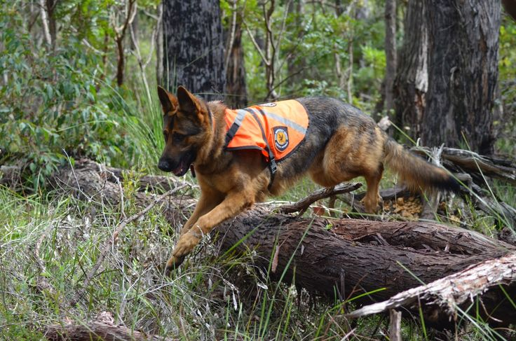 Montana Search And Rescue Dog Training