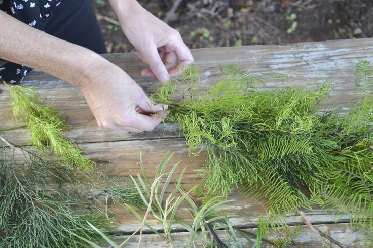 Bribie pine, Goanna claw, Sea star fern, Koala fern all coming together