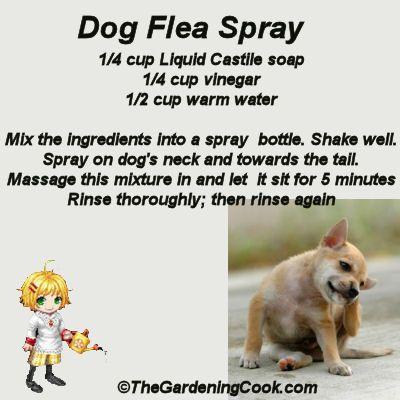 DIY Dog Flea Spray - Go Green -  http://thegardeningcook.com/diy-dog-flea-spray/