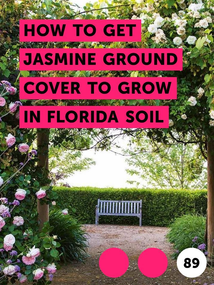 How To Get Jasmine Ground Cover To Grow In Florida Soil With Images Jasmine Ground Cover Ground Cover Lawn