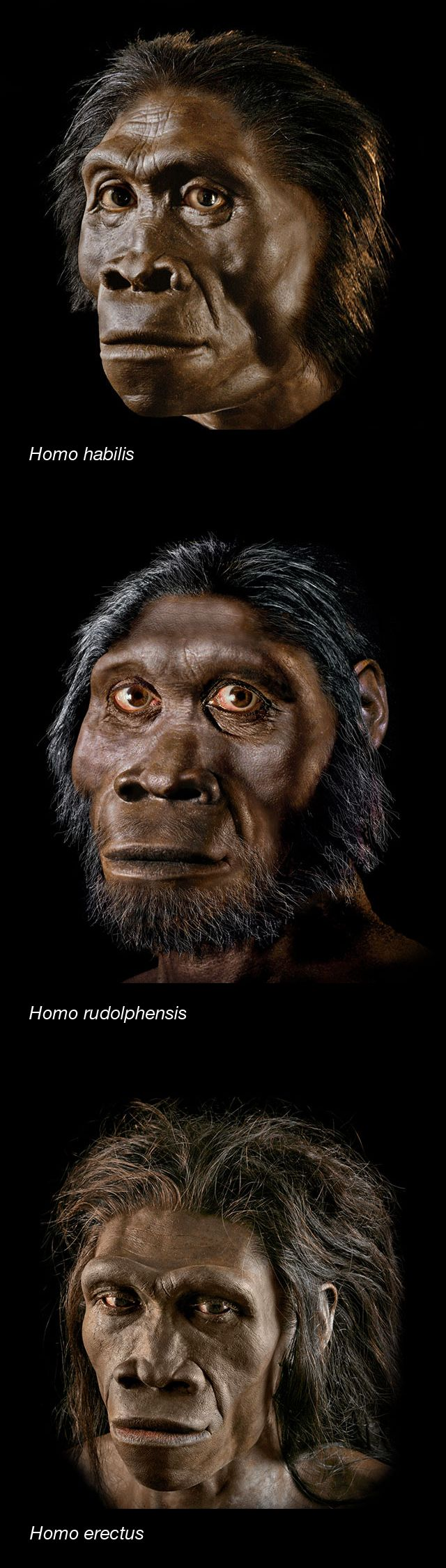 With all the buzz about Homo naledi, the newly discovered human ancestor, here's some background that will help put it in context.
