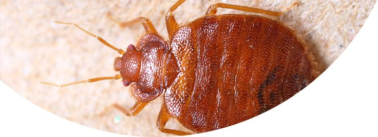 Learn about Clegg's Bed Bug Treatments!