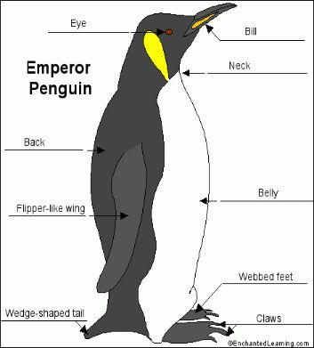 best 25+ penguin research ideas on pinterest | penguin ... wiring diagram seymour duncan little 59 strat little penguin diagram #14