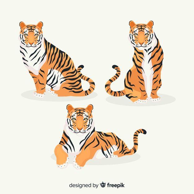 Tiger Illustration Vector