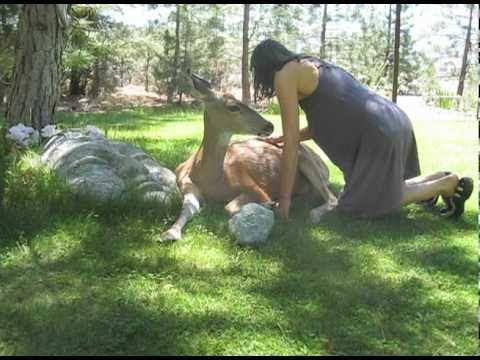 Injured deer, let's friend rub healing salve on back. Watch end of video for deers amazing repayment.