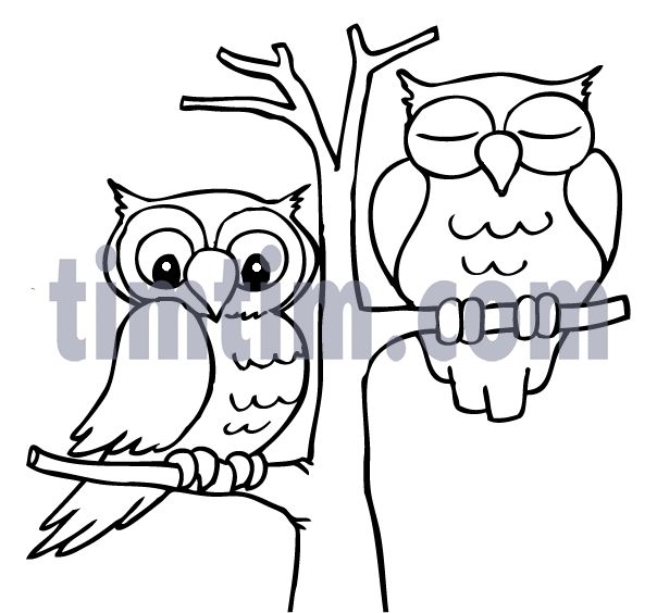 Best 25 Drawings of owls ideas on Pinterest How to draw owl