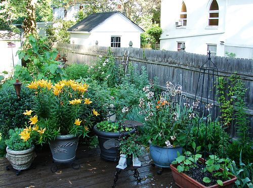 Container gardening: common mistakes