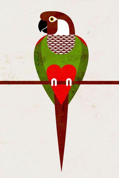 Scott Partridge -  Grey-breasted Parakeet