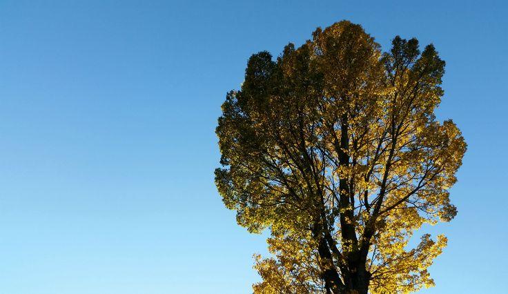Sarah Rooftops: The Autumnal Slowdown