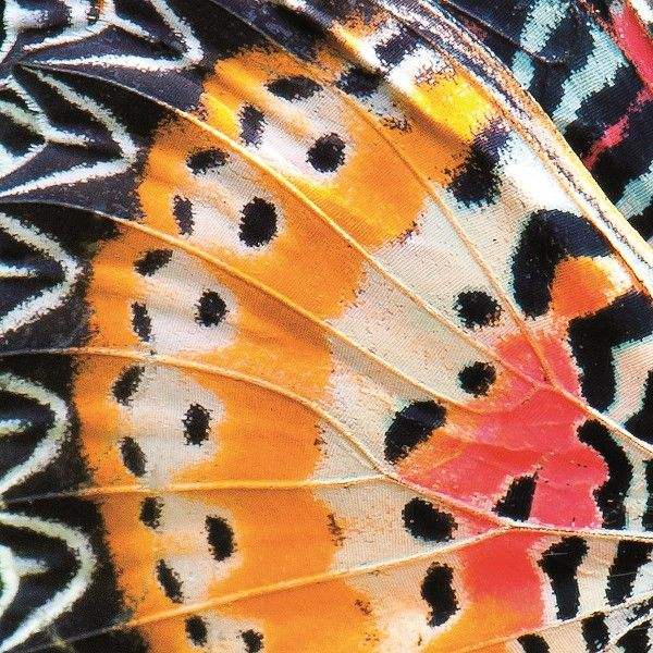 How gorgeous! A butterfly wing close up.The Most Beautiful Book of 2016 is 'Patterns in Nature'