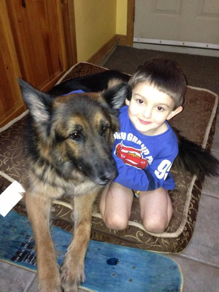 Really. german shepherd and kids