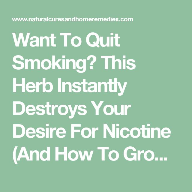 Want To Quit Smoking? This Herb Instantly Destroys Your Desire For Nicotine (And How To Grow It) | Natural Cures And Home Remedies