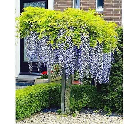68 best Ideen für den Garten images on Pinterest Decks, Plants and - gartenpflanzen winterhart immergrun