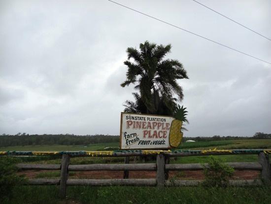 Australia - Queensland, Pineapples