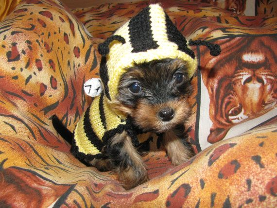 Knitted dog sweater Bee dog jumper puppy sweater by annastoikova, $17.00