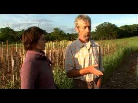 L'abondance naturelle au potager avec le Bois Raméal Fragmenté, BRF - YouTube