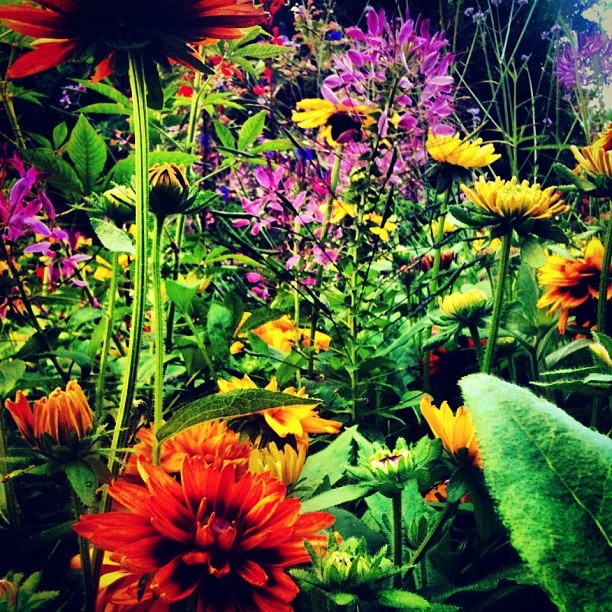 My favorite flower bed in Vancouver, BC at the George Wainborn Park in downtown  iphoneography NikNaz K.