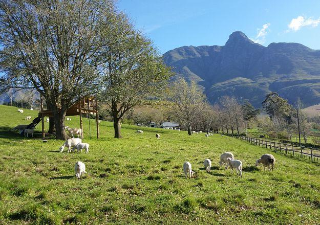 Eenuurkop Guest Farm is pure plaas in die Swellendam-omgewing, en daar kan jy ook gaan vakansie hou!