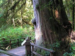 Tofino Rain Forest Trail, Tofino, BC, Tofino Hiking Trails, interpretive plaques are along the trails