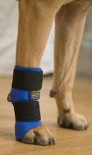 Thera-Paw Carpo Flex Sports Wrap for Dogs, Splints and Rehabilitative Dog Products : TopDogs