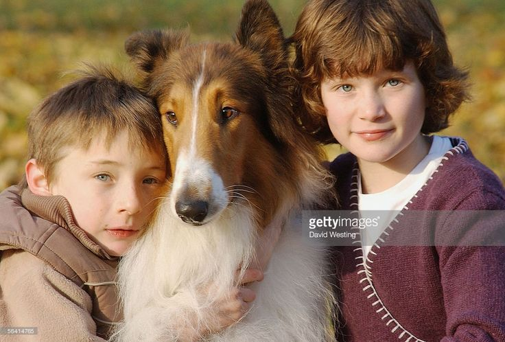 Actors Jonathan Mason and Hester Odgers pose with the dog who plays Lassie at a photocall for the new Lassie film, based on Eric Knight's Lassie Come Home, at Hyde Park Corner Band Stand on December 11, 2005 in London, England. The film, released in the UK in time for Christmas on December 16, also stars Peter O'Toole, Samantha Morton and Steve Pemberton.