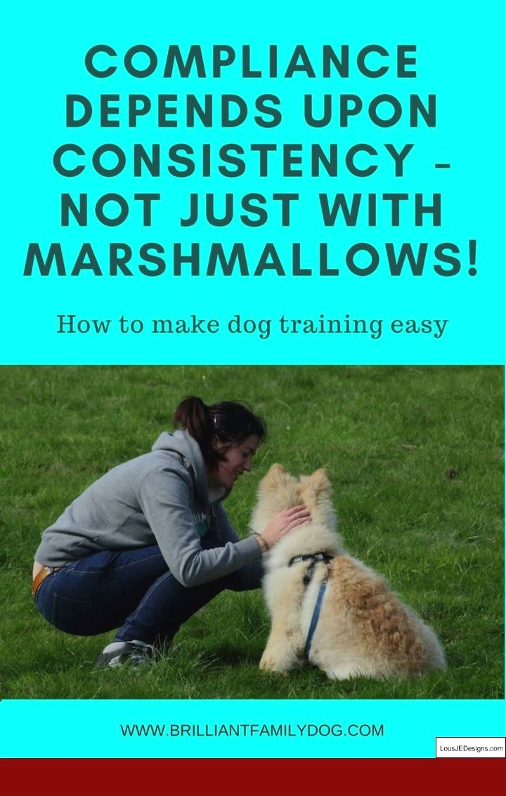 How To Train Your Dog To Not Bark At Dogs And Pics Of How To Train