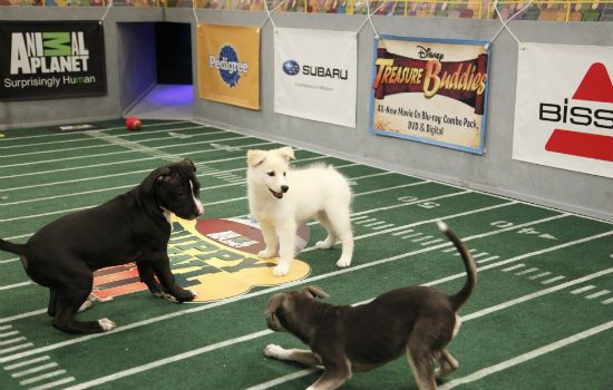 Animal Planet Puppy Bowl <3