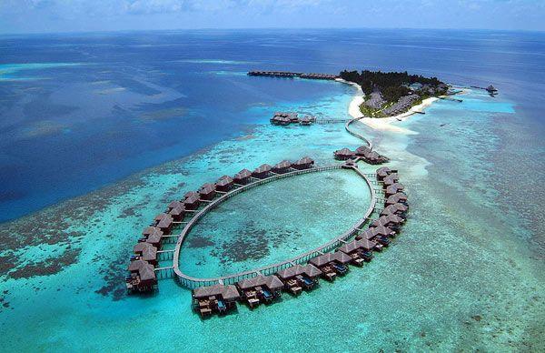 Coco palm, Maldives