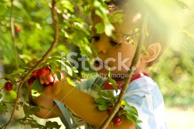Boy picking cornel Royalty Free Stock Photo