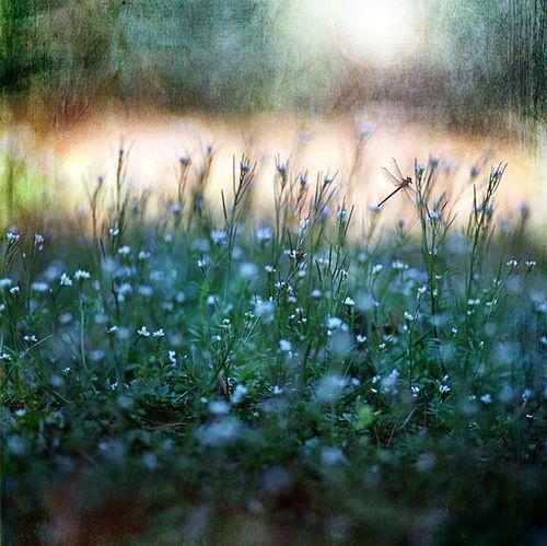 thebeldam:kinoko-mushroom:prettylittleflower:by Belle & Bear
